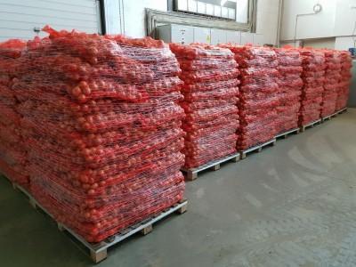 cebule przygotowane do transportu