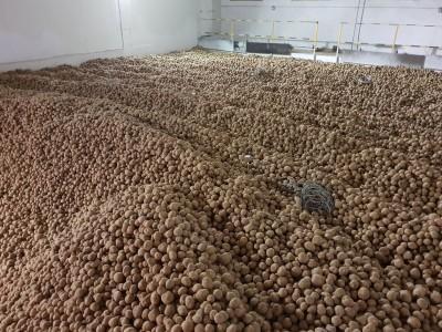 hala wypełniona cebulą