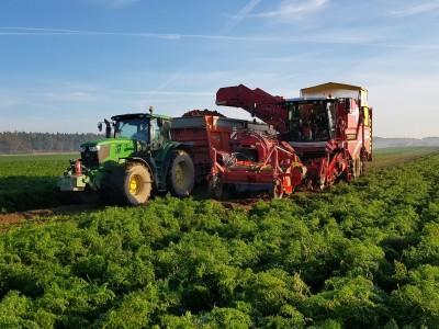 kombajn wrzucający uprawy na przyczepę traktora