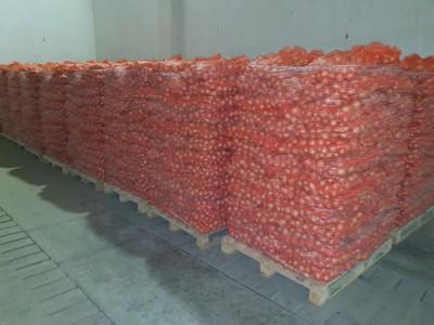 zabezpieczone cebule